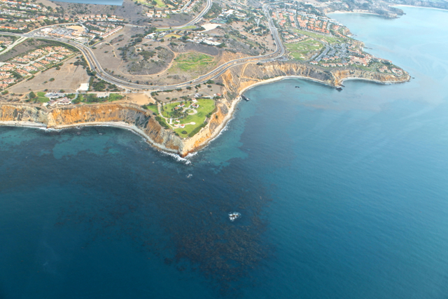 Kelp Forests in the ocean in marine protected areas off the Palos Verdes coast