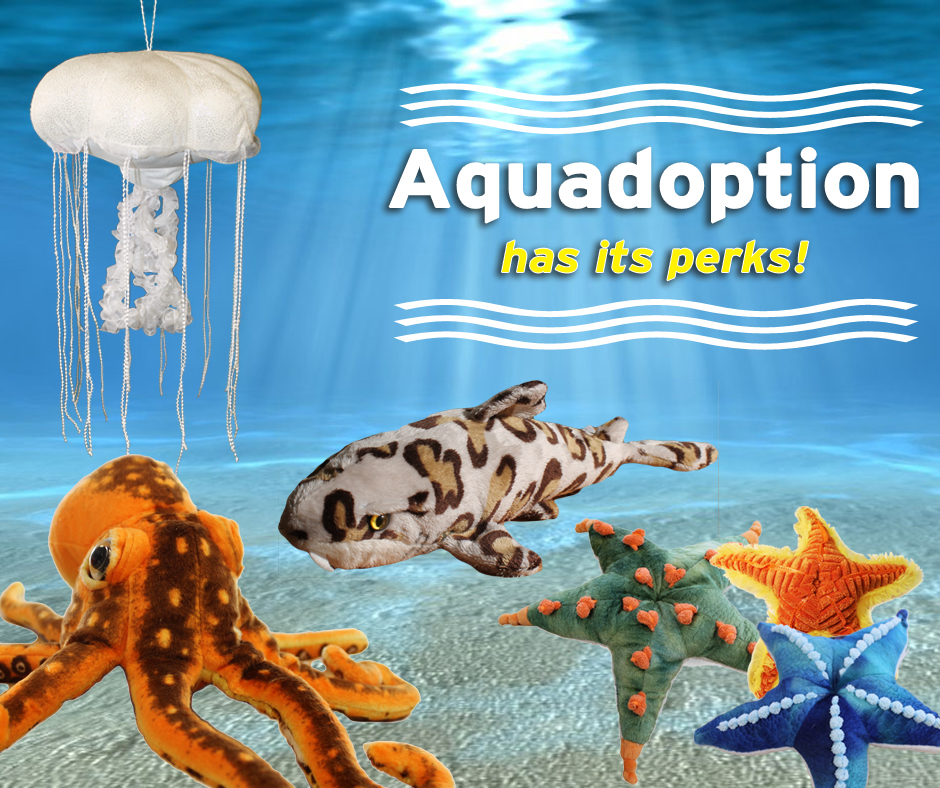 Aquadoption at the Santa Monica Pier Aquarium