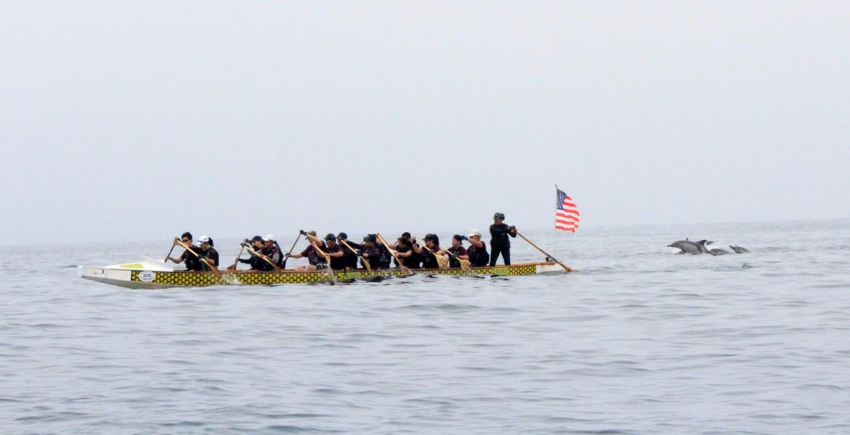 AeroDragons dragon boat team encounters dolphins during historic Catalina Channel Crossing