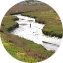 Ballona Wetlands offers the best nature tour