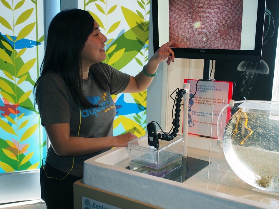 Aquarist Akino Higa shows off the new exhibit at Santa Monica Pier Aquarium