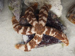 Lend a hand as staff feed the sea stars.