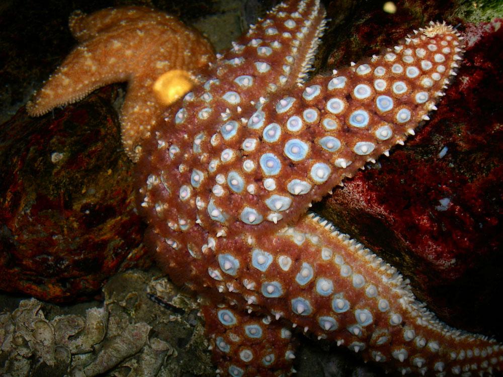 Lend a hand as staff feed the sea stars.