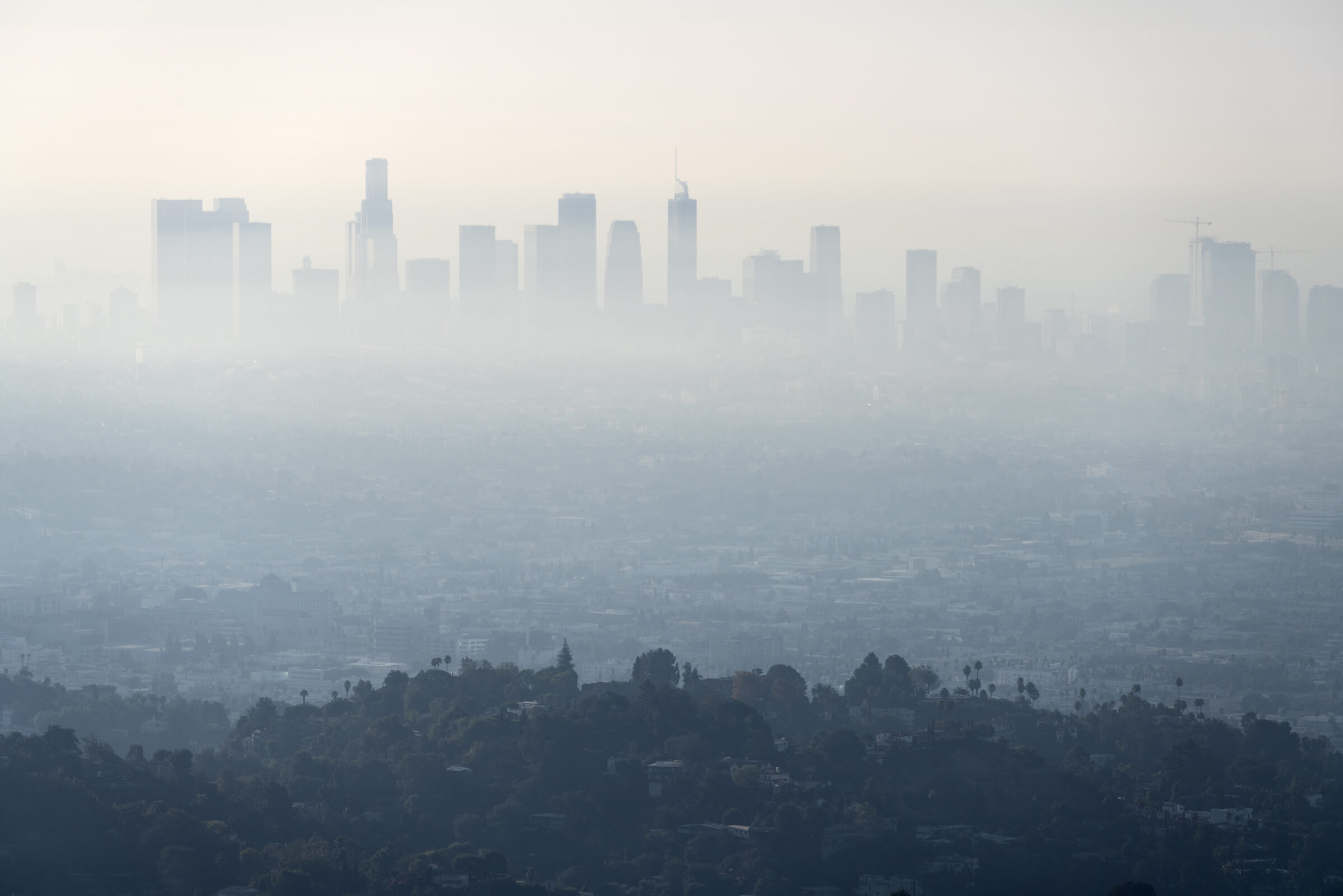 Thick layer of smog and haze from nearby brush fire obscuring the view of downtown Los Angeles buildings in Southern California.   Shot from hilltop in popular Griffith Park.